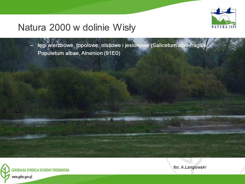 Natura 2000 w dolinie Wisły łęgi wierzbowe, topolowe, olszowe i jesionowe (Salicetum albo-fragilis, Populetum albae, Alnenion (91E0)