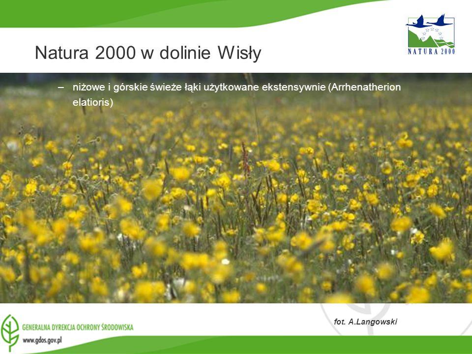 Natura 2000 w dolinie Wisły niżowe i górskie świeże łąki użytkowane ekstensywnie (Arrhenatherion elatioris)
