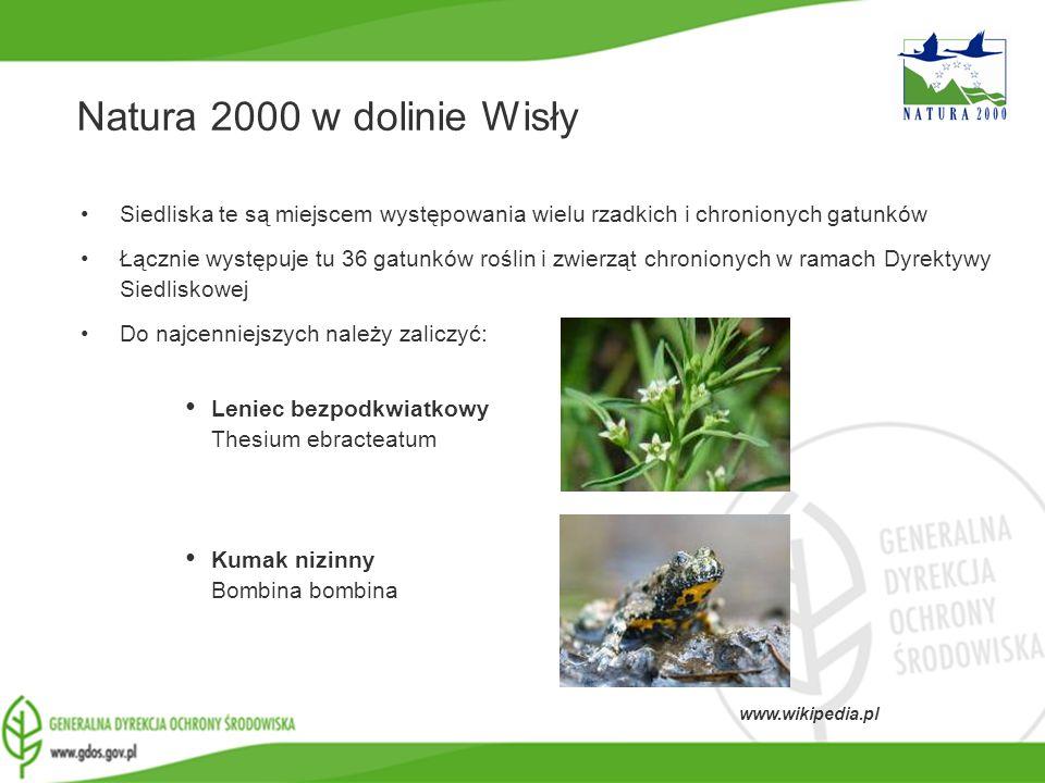 Natura 2000 w dolinie Wisły Siedliska te są miejscem występowania wielu rzadkich i chronionych gatunków.
