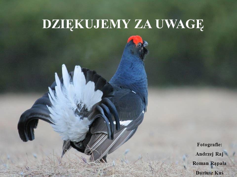 DZIĘKUJEMY ZA UWAGĘ Fotografie: Andrzej Raj Roman Rąpała Dariusz Kuś