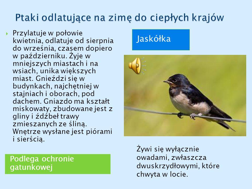 Ptaki odlatujące na zimę do ciepłych krajów