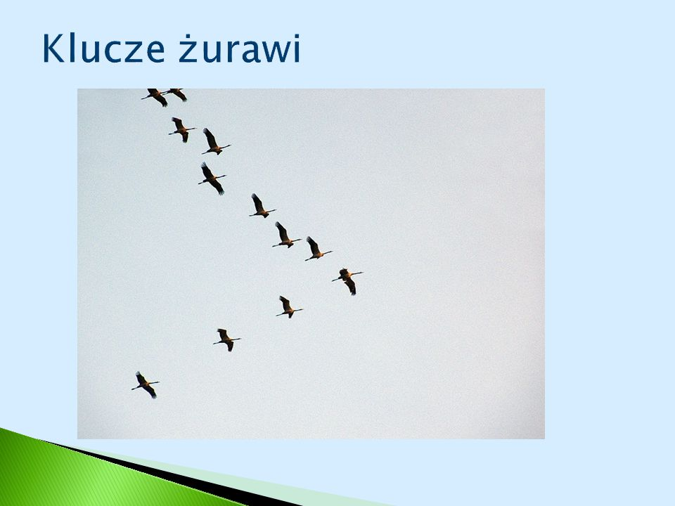Klucze żurawi