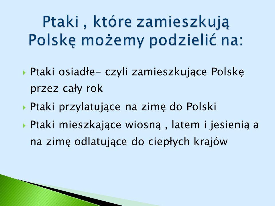 Ptaki , które zamieszkują Polskę możemy podzielić na: