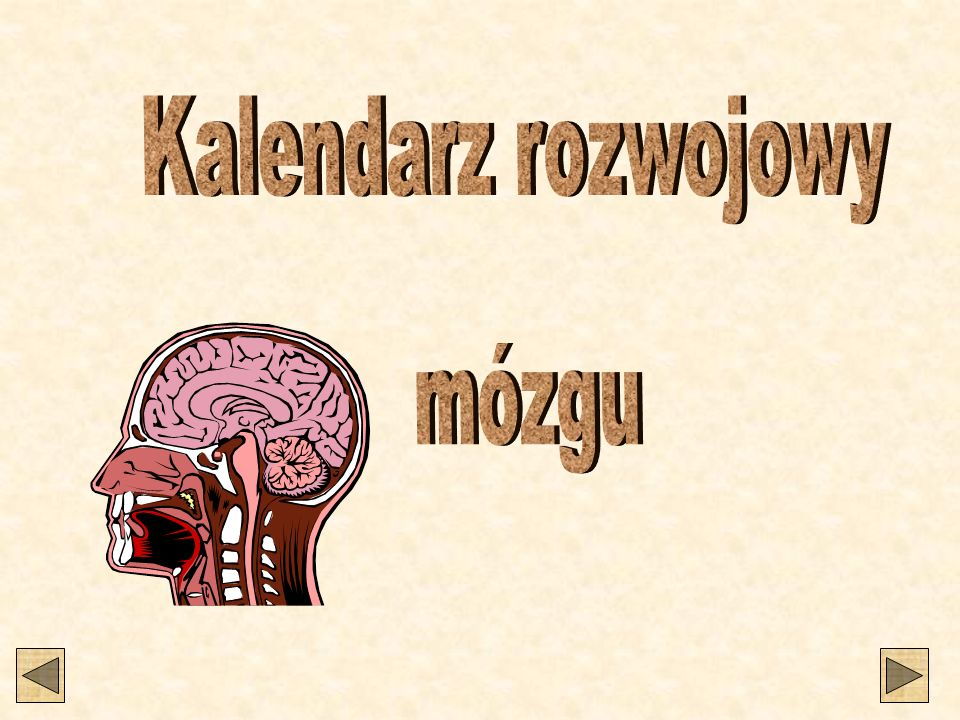 Kalendarz rozwojowy mózgu