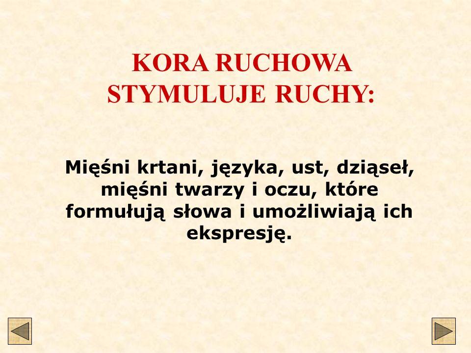 KORA RUCHOWA STYMULUJE RUCHY: