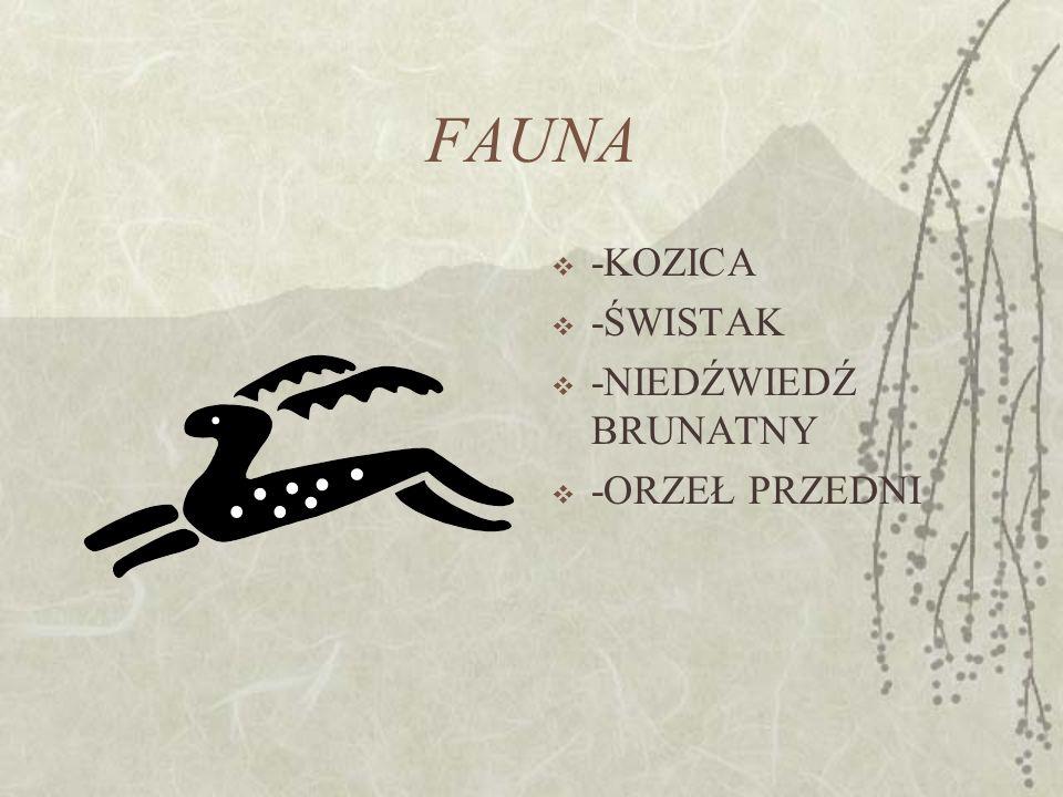 FAUNA -KOZICA -ŚWISTAK -NIEDŹWIEDŹ BRUNATNY -ORZEŁ PRZEDNI