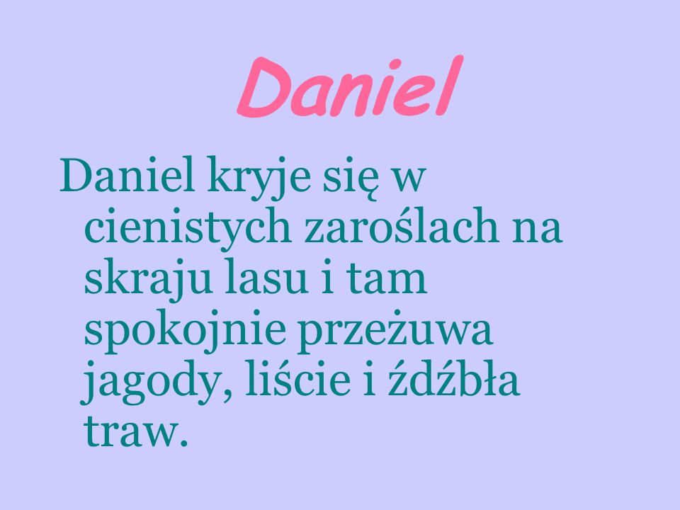 Daniel Daniel kryje się w cienistych zaroślach na skraju lasu i tam spokojnie przeżuwa jagody, liście i źdźbła traw.