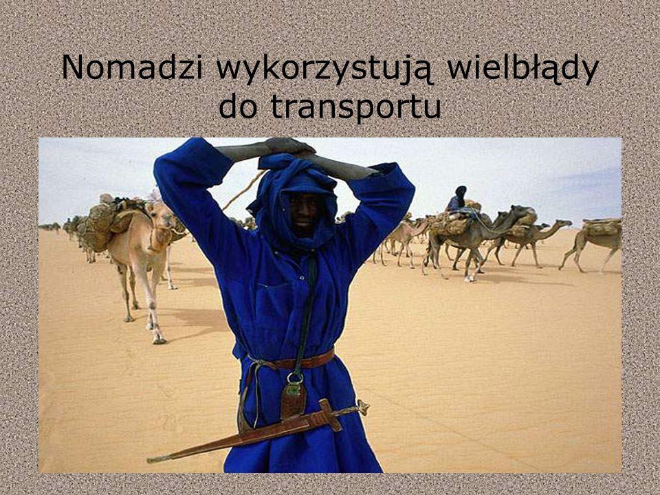 Nomadzi wykorzystują wielbłądy do transportu