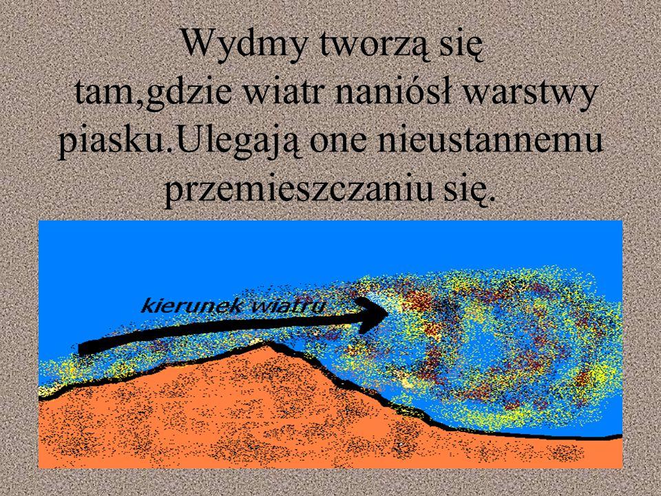 Wydmy tworzą się tam,gdzie wiatr naniósł warstwy piasku