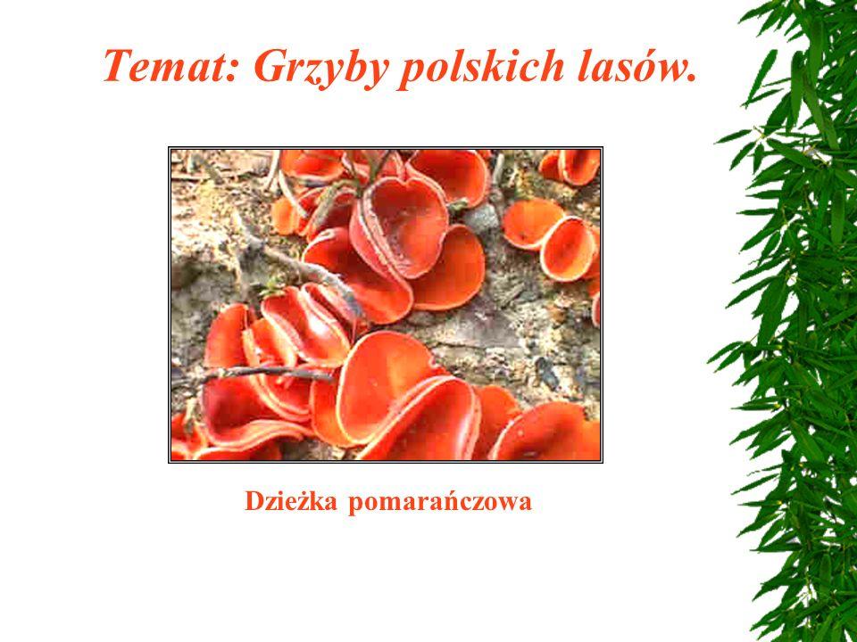 Temat: Grzyby polskich lasów.