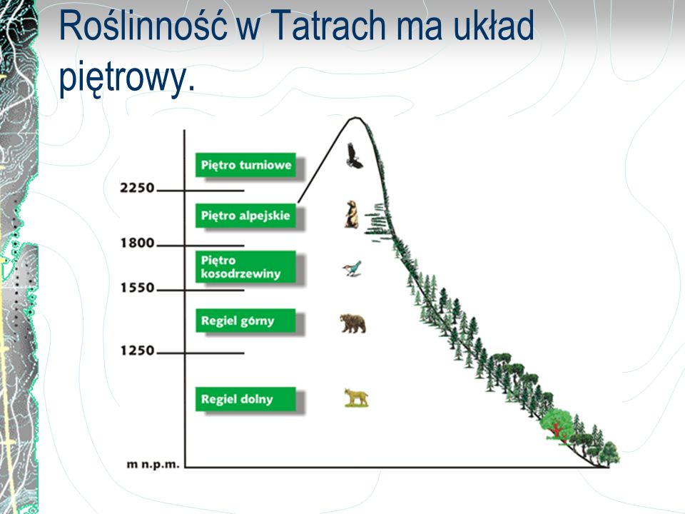 Roślinność w Tatrach ma układ piętrowy.