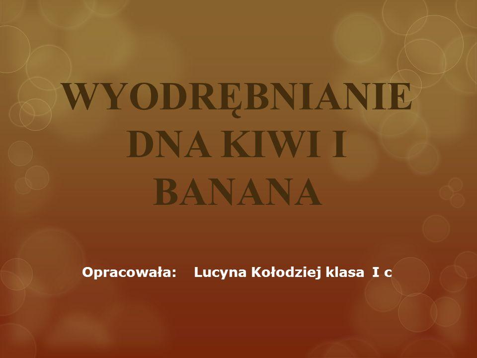 WYODRĘBNIANIE DNA KIWI I BANANA