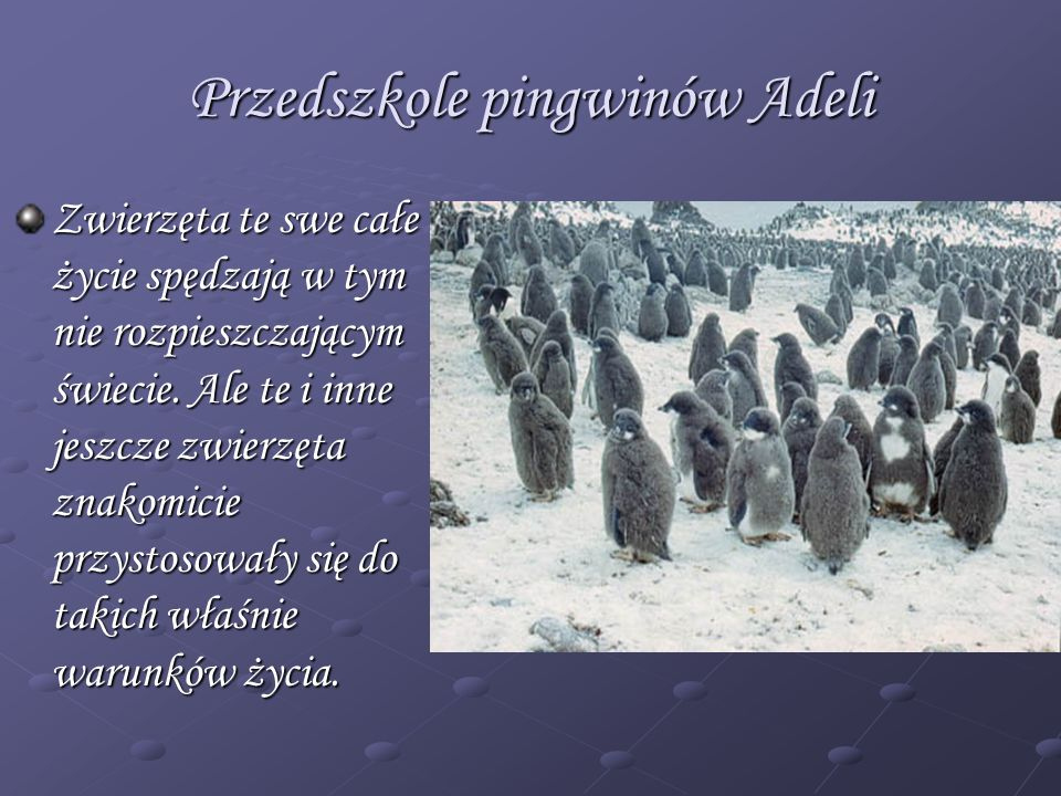 Przedszkole pingwinów Adeli