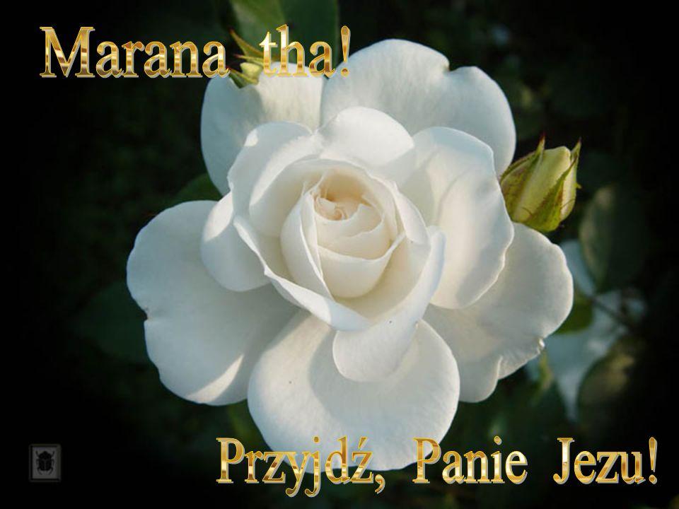 Marana tha! Przyjdź, Panie Jezu!