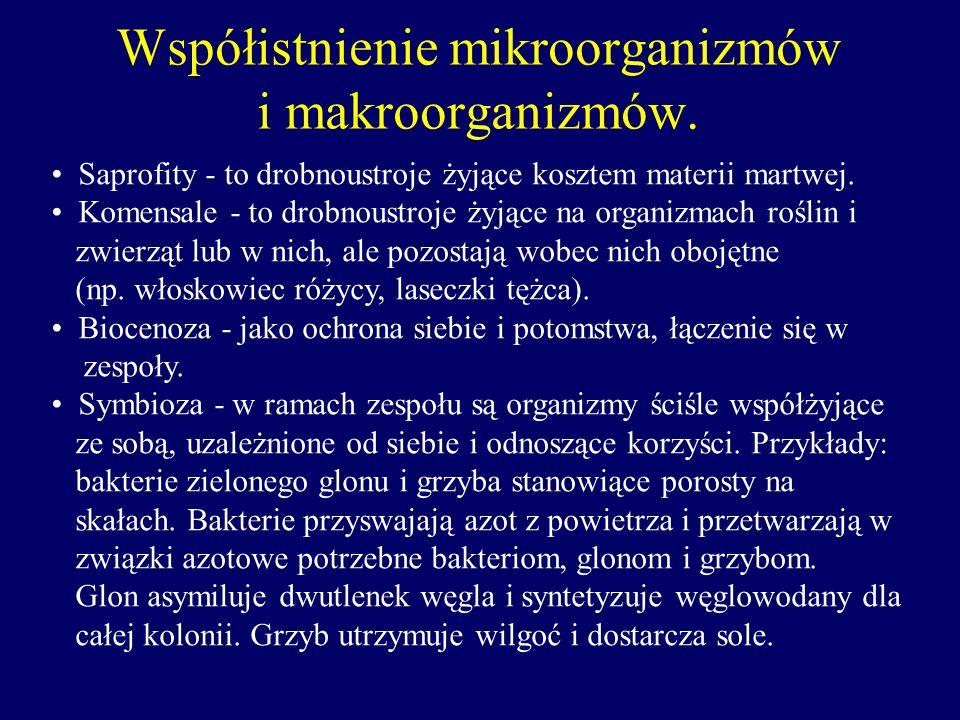 Współistnienie mikroorganizmów i makroorganizmów.