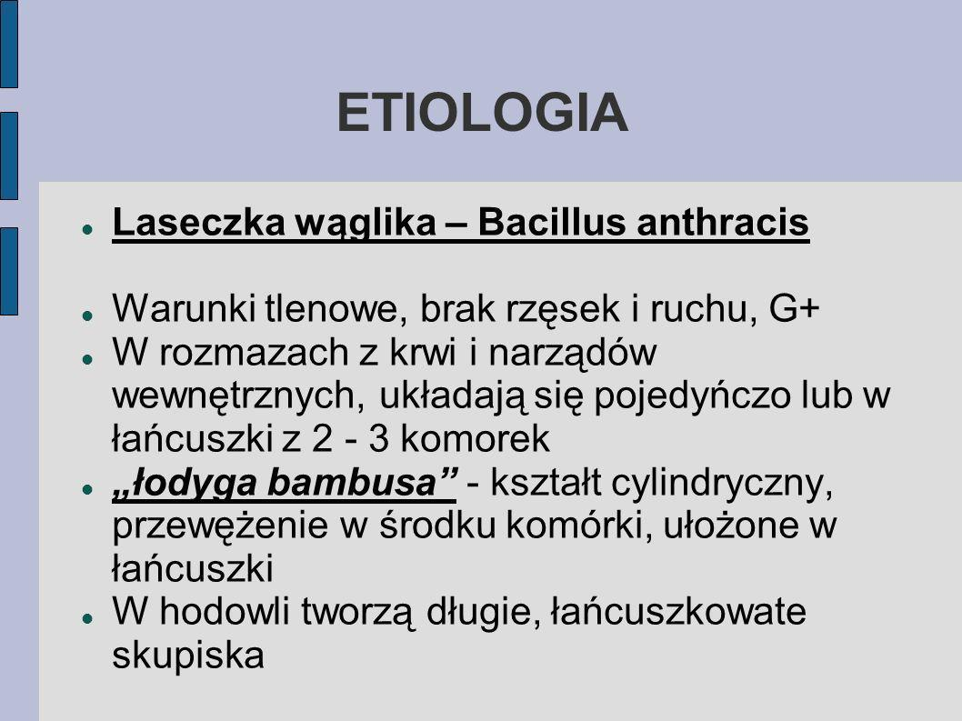 ETIOLOGIA Laseczka wąglika – Bacillus anthracis