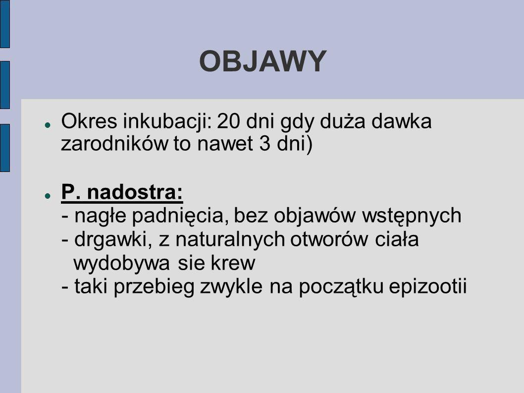 OBJAWY Okres inkubacji: 20 dni gdy duża dawka zarodników to nawet 3 dni) P. nadostra: - nagłe padnięcia, bez objawów wstępnych.