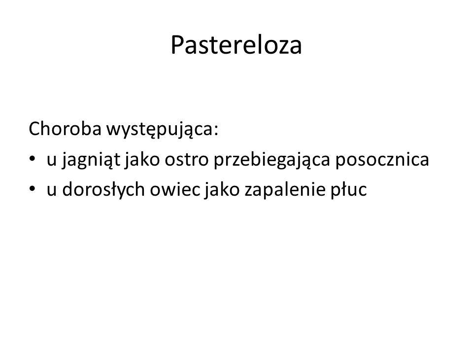 Pastereloza Choroba występująca: