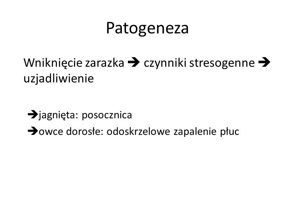 Patogeneza Wniknięcie zarazka  czynniki stresogenne  uzjadliwienie
