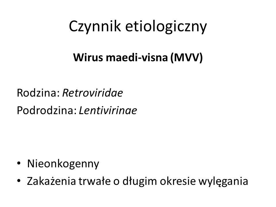 Wirus maedi-visna (MVV)