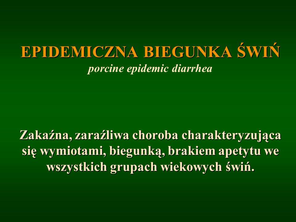 EPIDEMICZNA BIEGUNKA ŚWIŃ porcine epidemic diarrhea