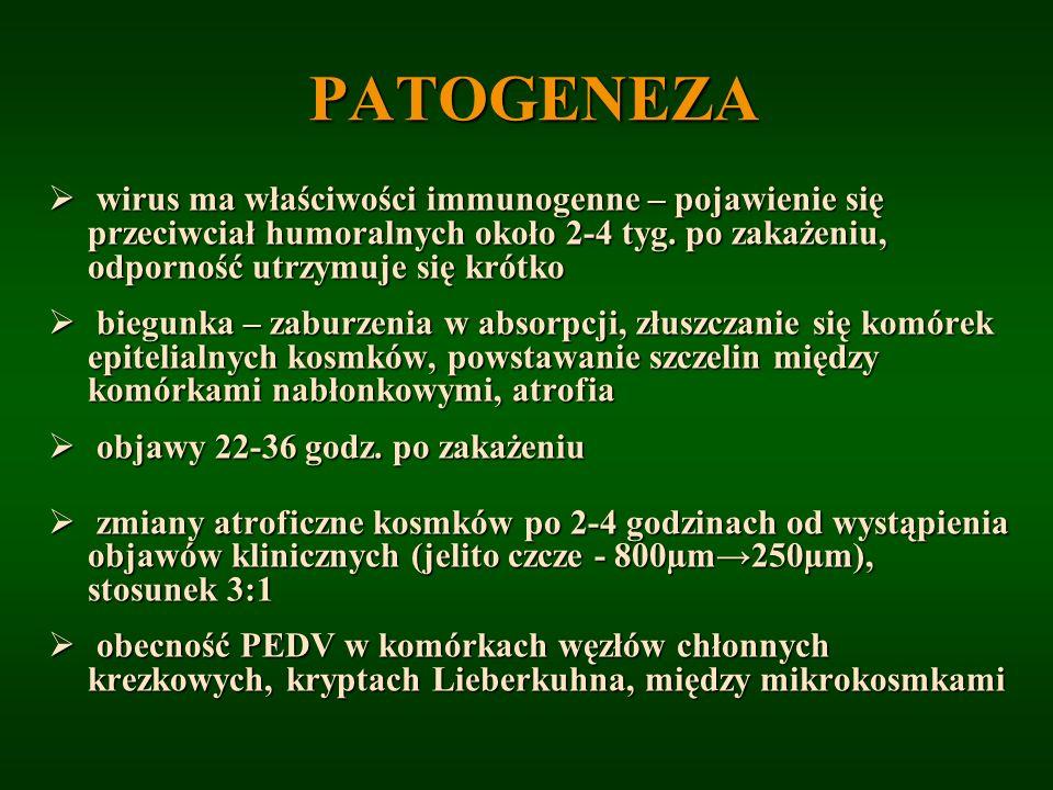 PATOGENEZAwirus ma właściwości immunogenne – pojawienie się przeciwciał humoralnych około 2-4 tyg. po zakażeniu, odporność utrzymuje się krótko.