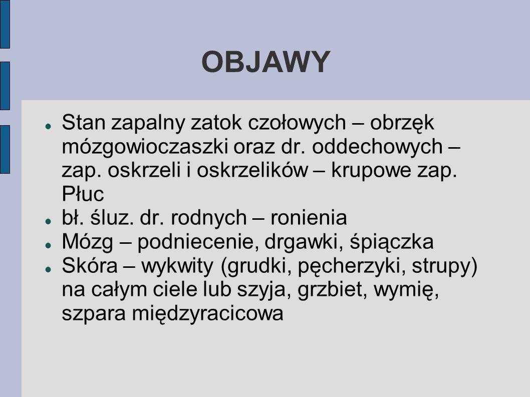 OBJAWYStan zapalny zatok czołowych – obrzęk mózgowioczaszki oraz dr. oddechowych – zap. oskrzeli i oskrzelików – krupowe zap. Płuc.