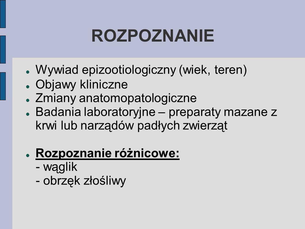 ROZPOZNANIE Wywiad epizootiologiczny (wiek, teren) Objawy kliniczne