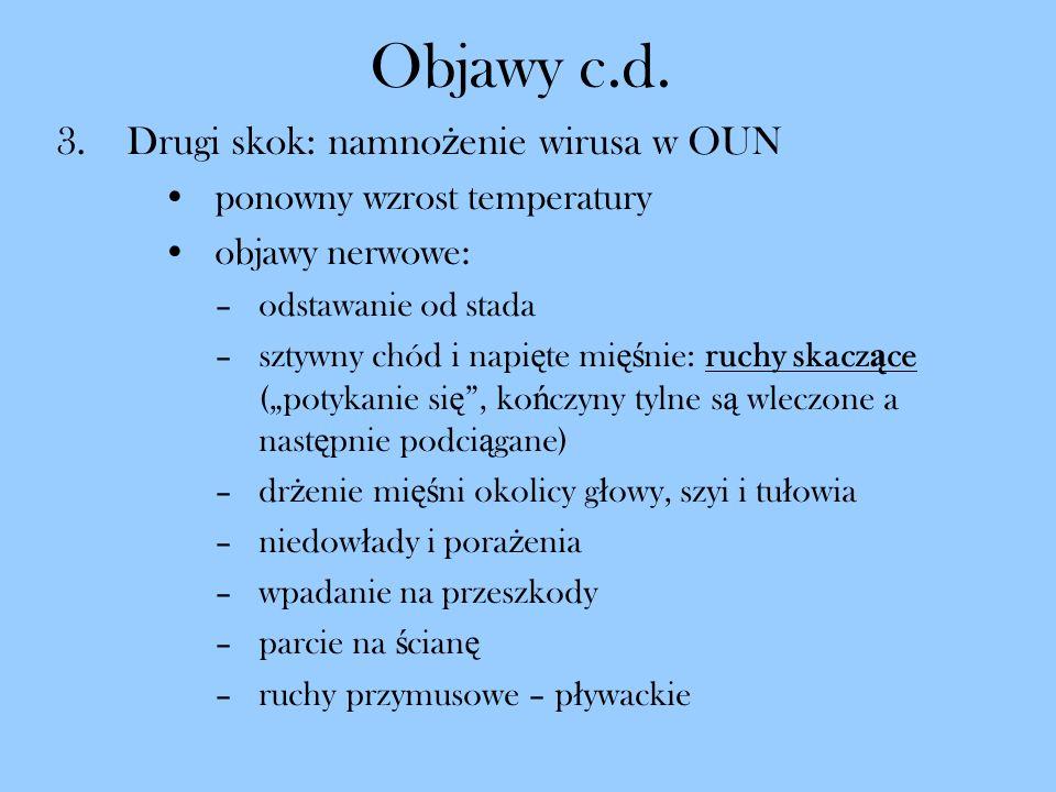 Objawy c.d. Drugi skok: namnożenie wirusa w OUN