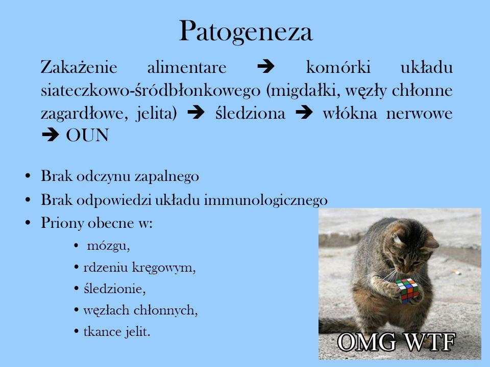 Patogeneza