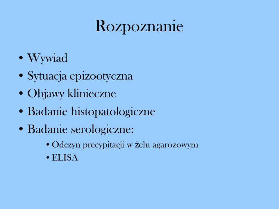 Rozpoznanie Wywiad Sytuacja epizootyczna Objawy klinieczne