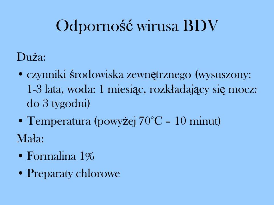 Odporność wirusa BDV Duża: