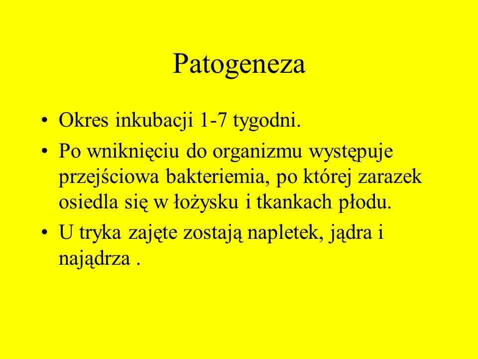 Patogeneza Okres inkubacji 1-7 tygodni.