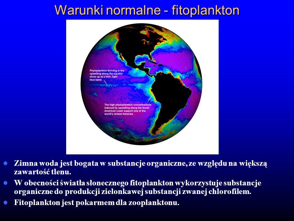 Warunki normalne - fitoplankton