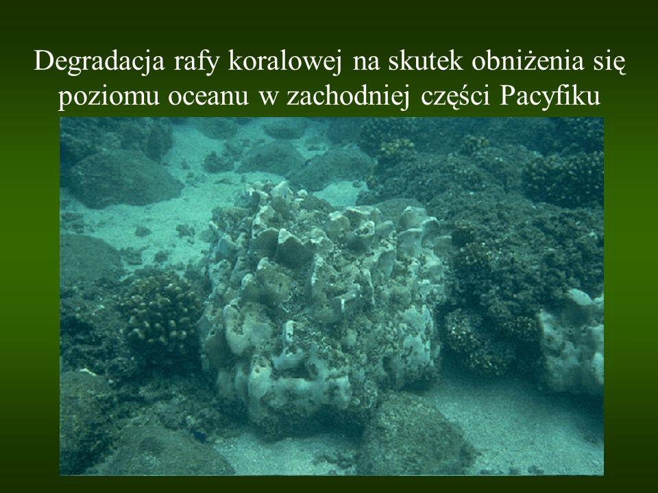 Degradacja rafy koralowej na skutek obniżenia się poziomu oceanu w zachodniej części Pacyfiku