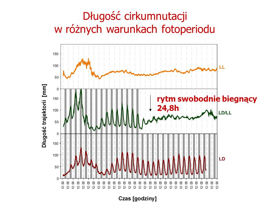 Długość cirkumnutacji w różnych warunkach fotoperiodu