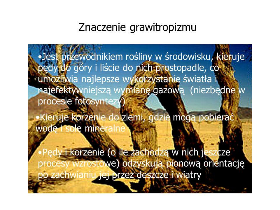 Znaczenie grawitropizmu