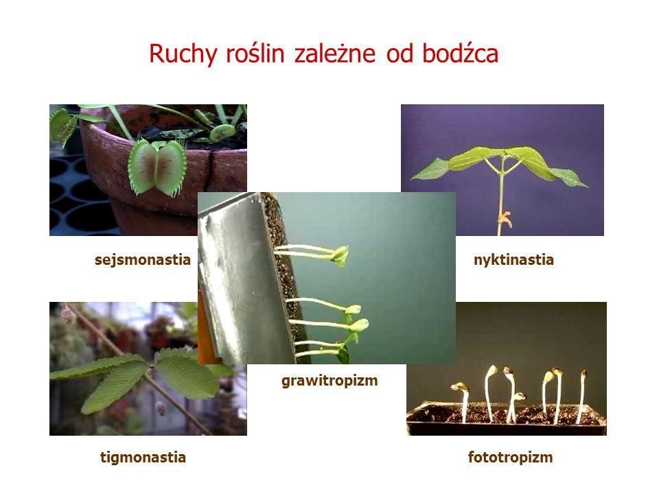 Ruchy roślin zależne od bodźca