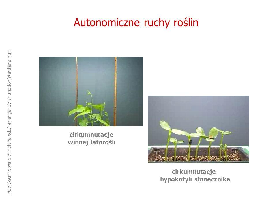 Autonomiczne ruchy roślin