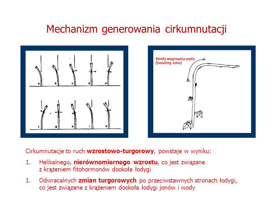 Mechanizm generowania cirkumnutacji