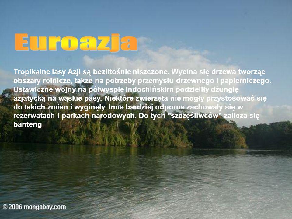 Euroazja