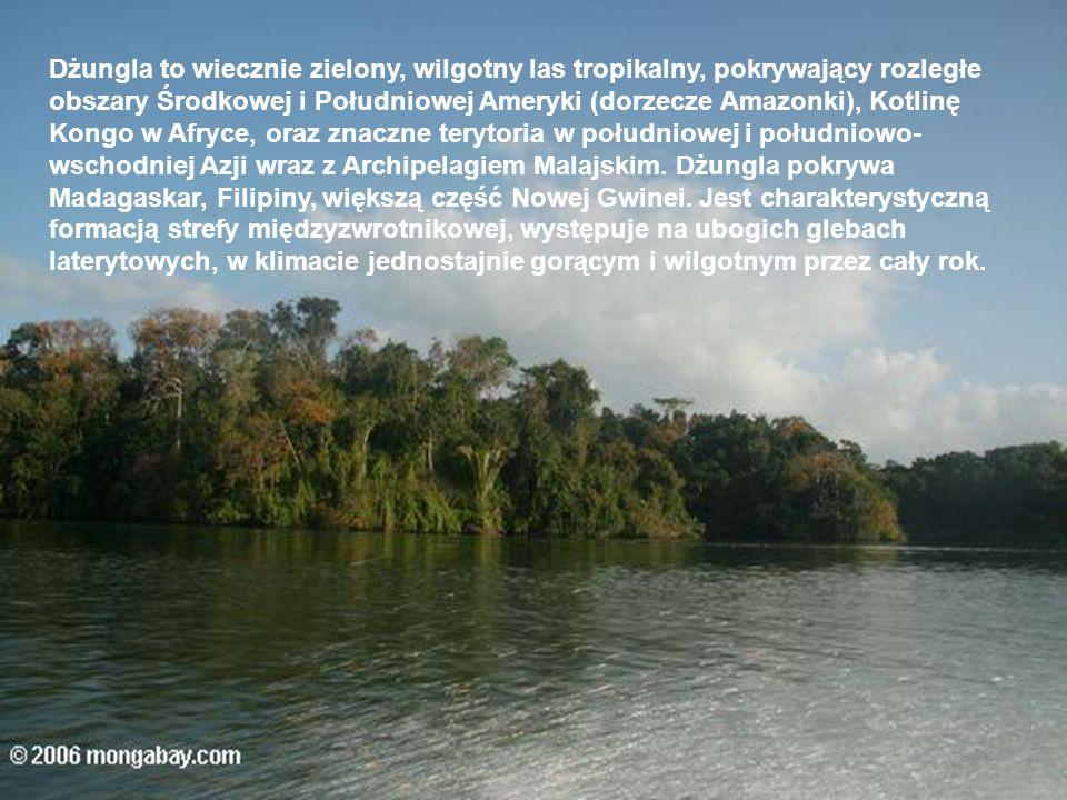 Dżungla to wiecznie zielony, wilgotny las tropikalny, pokrywający rozległe obszary Środkowej i Południowej Ameryki (dorzecze Amazonki), Kotlinę Kongo w Afryce, oraz znaczne terytoria w południowej i południowo-wschodniej Azji wraz z Archipelagiem Malajskim.