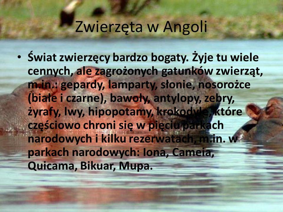 Zwierzęta w Angoli