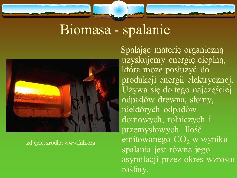 zdjęcie, źródło: www.fnh.org