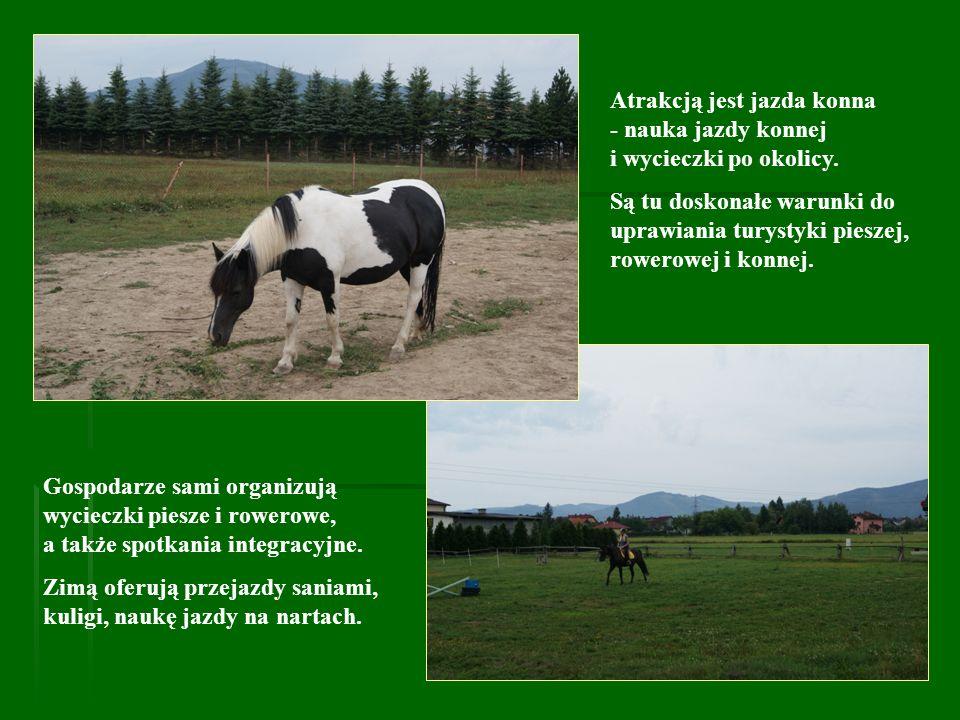 Atrakcją jest jazda konna - nauka jazdy konnej