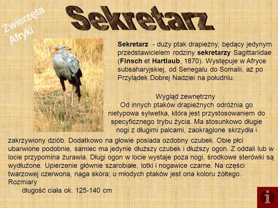 Sekretarz Zwierzęta Afryki