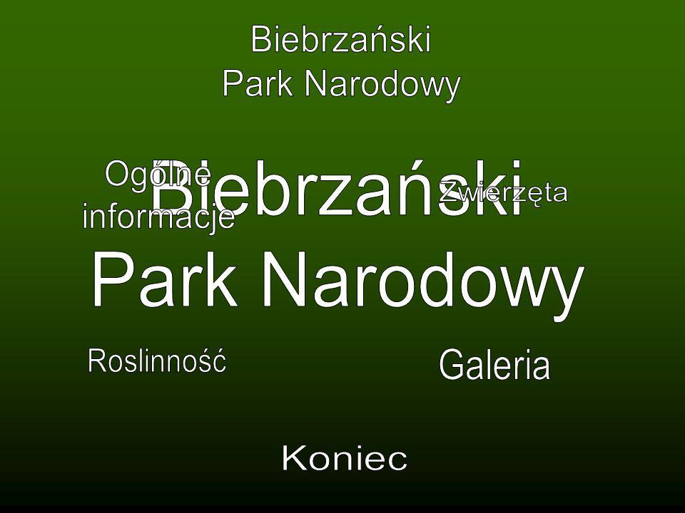 Biebrzański Park Narodowy. Ogólne. informacje. Biebrzański. Park Narodowy. Zwierzęta. Roslinność.
