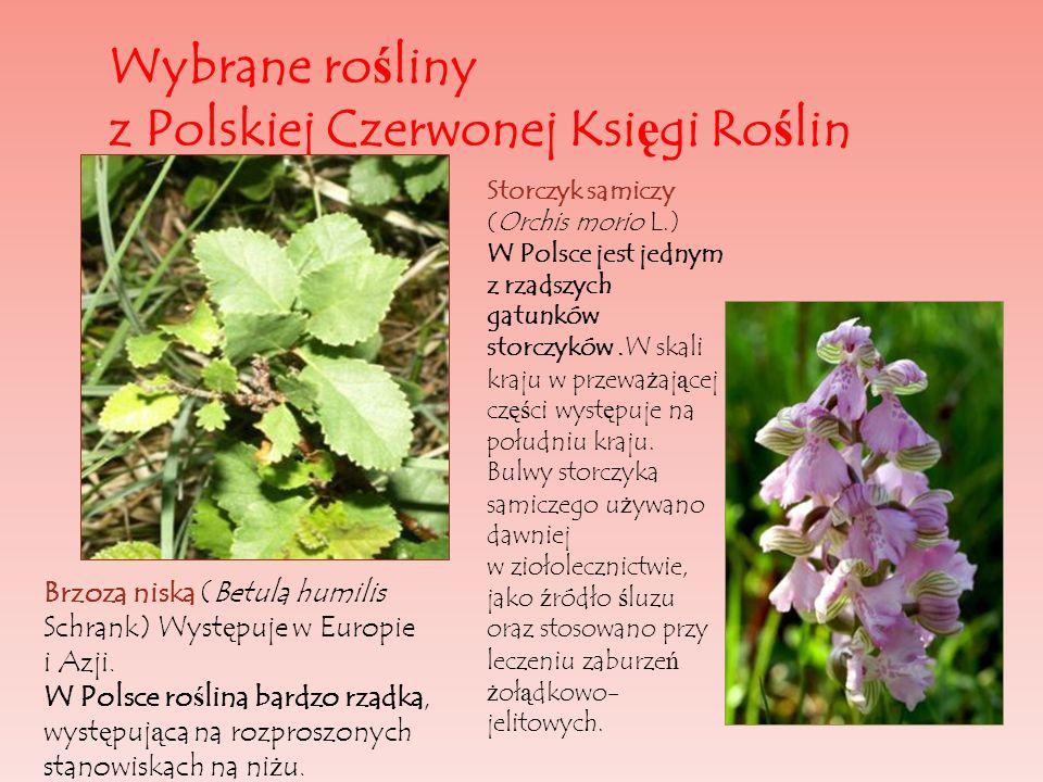 Wybrane rośliny z Polskiej Czerwonej Księgi Roślin