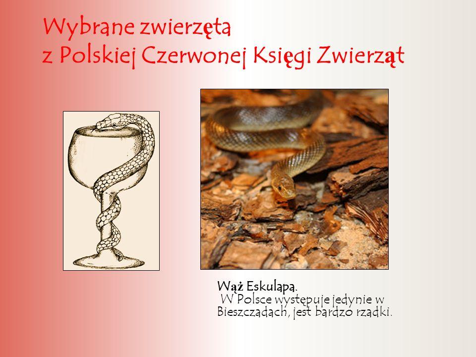 Wybrane zwierzęta z Polskiej Czerwonej Księgi Zwierząt