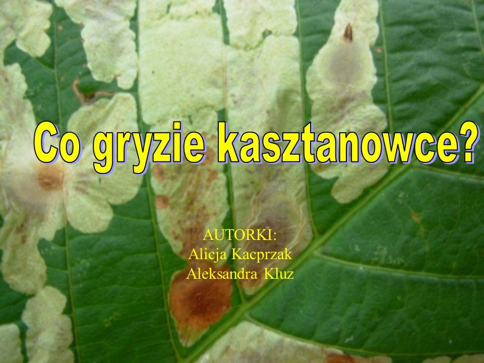 Co gryzie kasztanowce AUTORKI: Alicja Kacprzak Aleksandra Kluz